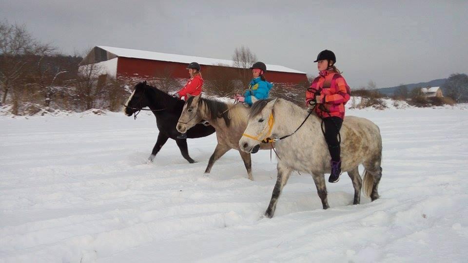 Pololetní zotavovací akce s koňmi 2021
